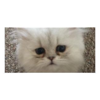 Sad eyes white fluffy kitten looking up card