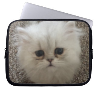 Sad eyes white fluffy kitten looking up laptop sleeve