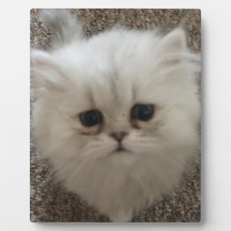 Sad eyes white fluffy kitten looking up photo plaques
