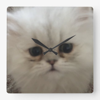 Sad eyes white fluffy kitten looking up square wall clock