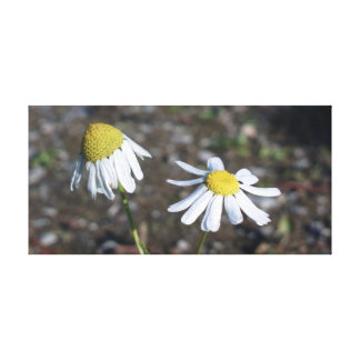 'Sad Happy' - Daisies (Flowers) Stretched Canvas Prints