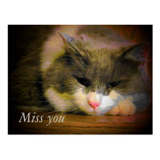 Sad kitty miss you postcard