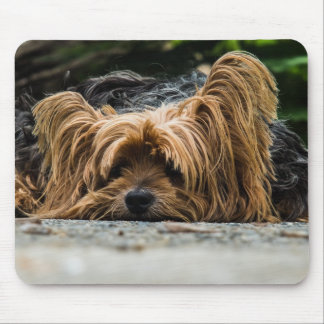 Sad Little Yorkie Mouse Pad