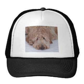 Sad, Lonely, Adorable, & Cute GoldenDoodle Dog Hats