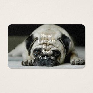 Sad pug - dog lying down - dog look - cute puppies business card