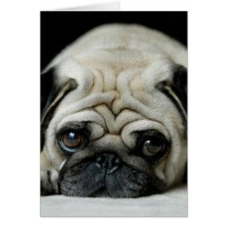 Sad pug - dog lying down - dog look - cute puppies card