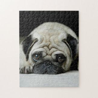 Sad pug - dog lying down - dog look - cute puppies jigsaw puzzle