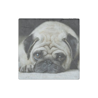 Sad pug - dog lying down - dog look - cute puppies stone magnet