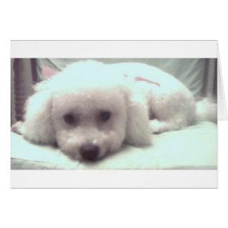 Sad puppy face card
