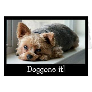Sad Yorkie Pup Belated Birthday Card