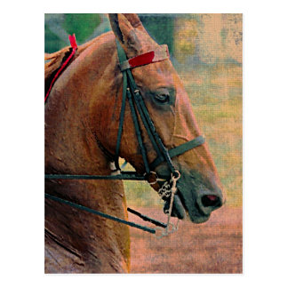 Saddlebred Faux Painting Postcard