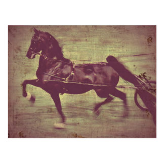 Saddlebred Song Postcard