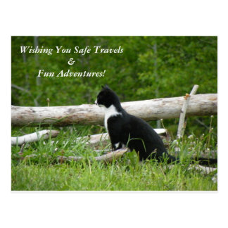 Safe Travels and Fun Adventures Kitten Postcard
