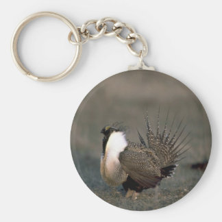 Sage grouse strutting basic round button key ring