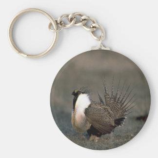 Sage grouse strutting key ring