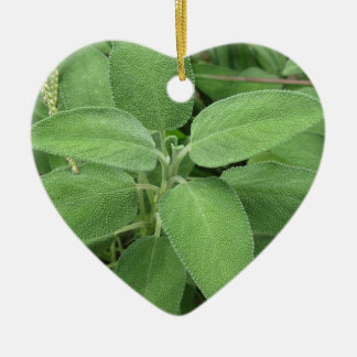 Sage plant in the garden. Tuscany, Italy Ceramic Heart Decoration