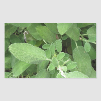 Sage plant in the garden. Tuscany, Italy Rectangular Sticker
