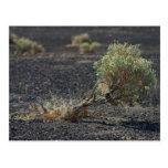Sagebrush Desert Post Card