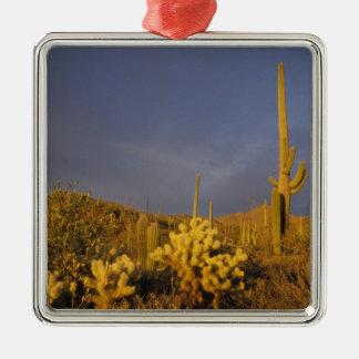 saguaro cacti, Carnegiea gigantea, and teddy Silver-Colored Square Decoration