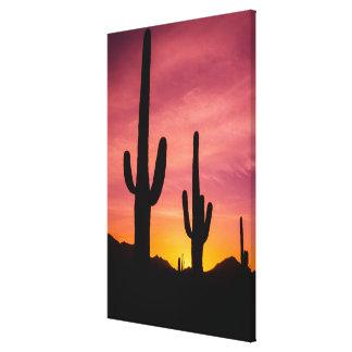 Saguaro cactus at sunrise, Arizona Canvas Print