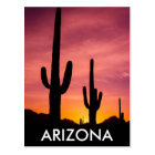 Saguaro cactus at sunrise, Arizona Postcard
