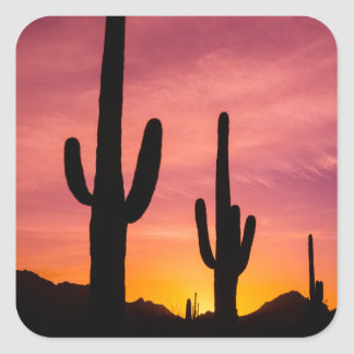 Saguaro cactus at sunrise, Arizona Square Sticker