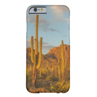Saguaro cactus at sunset, Arizona Barely There iPhone 6 Case