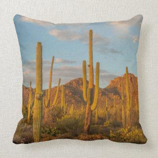 Saguaro cactus at sunset, Arizona Cushion