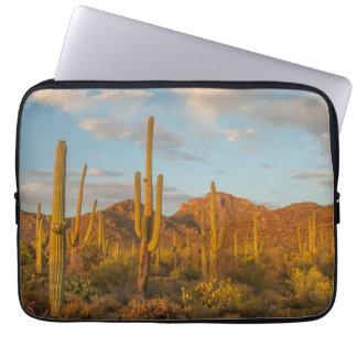 Saguaro cactus at sunset, Arizona Laptop Sleeve