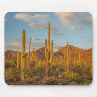 Saguaro cactus at sunset, Arizona Mouse Pad