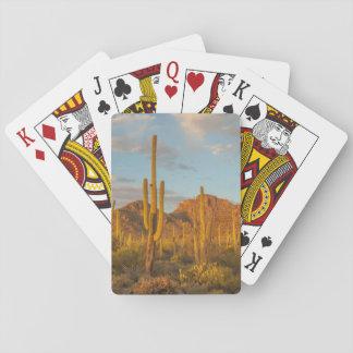 Saguaro cactus at sunset, Arizona Playing Cards