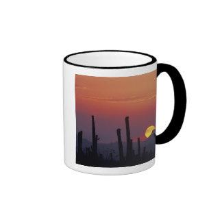 Saguaro Cactus Carnegiea gigantea), Sunset, Ringer Mug