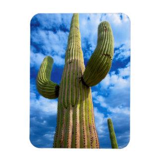 Saguaro cactus portrait, Arizona Magnet