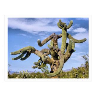 Saguaro Monster Postcard