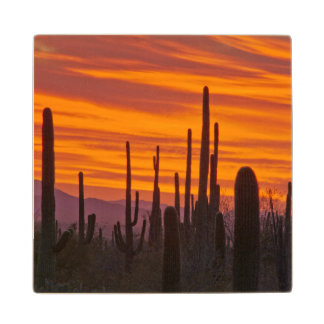 Saguaro, sunset, Saguaro National Park Wood Coaster