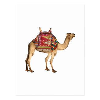 Saharan Taxi Postcard
