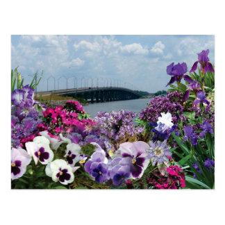 Sailboat bridge and flowers 15r1 postcard