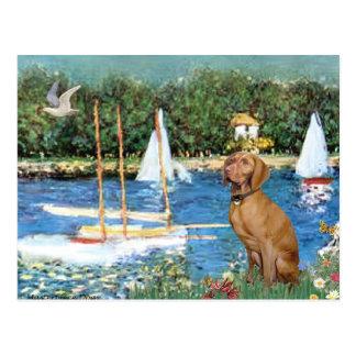 Sailboats - Vizsla 2 Postcard