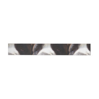 Saint-bernard eyes.png wraparound address label