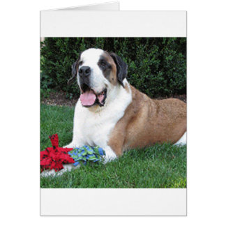 saint bernard laying card