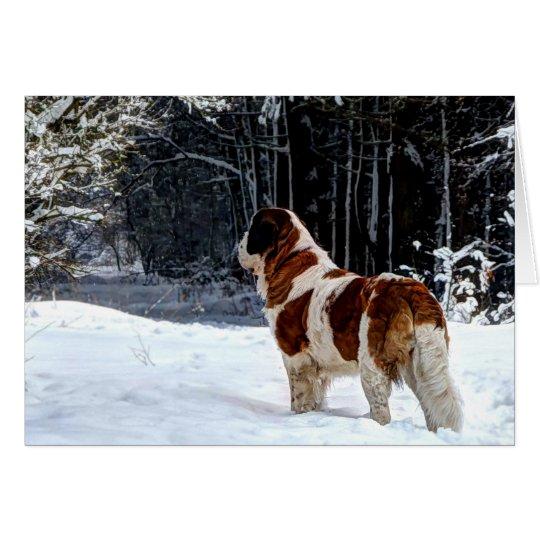 Saint Bernard snow photographic Christmas greeting Card