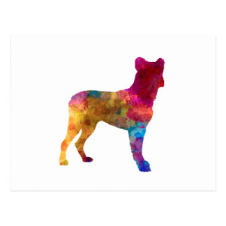 Saint Miguel Cattle Dog in watercolor Postcard