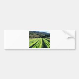 Saint Tereza/RS 3 Bumper Sticker