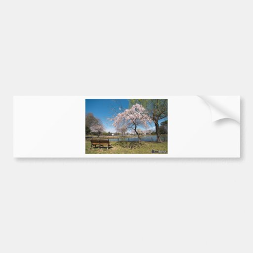 Sakura Bumper Stickers