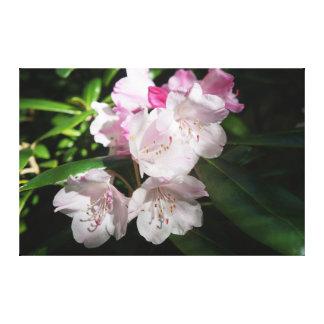 Sakura Cherry Blossom #2 Canvas