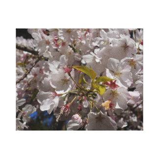 Sakura Cherry Blossom Canvas