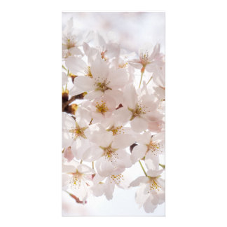 Sakura Cherry Blossom Personalized Photo Card