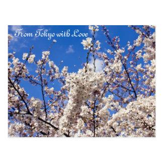 Sakura Cherry Blossoms White Blue Sky Tokyo Postcard