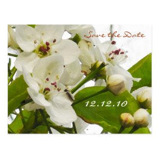 Sakura Wedding - Save the Date Card Postcard