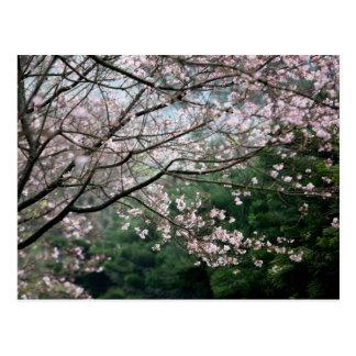 Sakura XXX Postcard